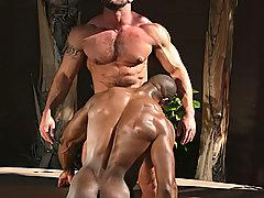 Pierro Sias::Edu Boxer